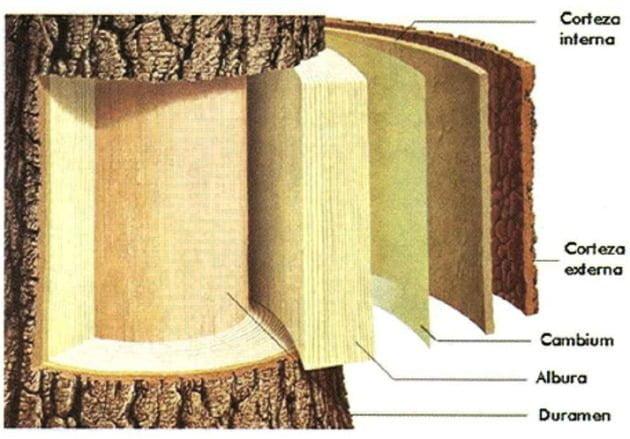 partes de la madera